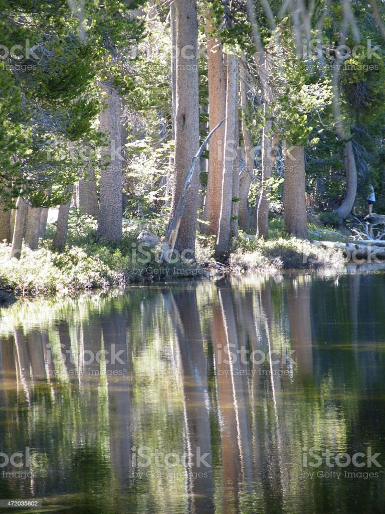 Trees relect in lake at Yosemite National Park stock photo