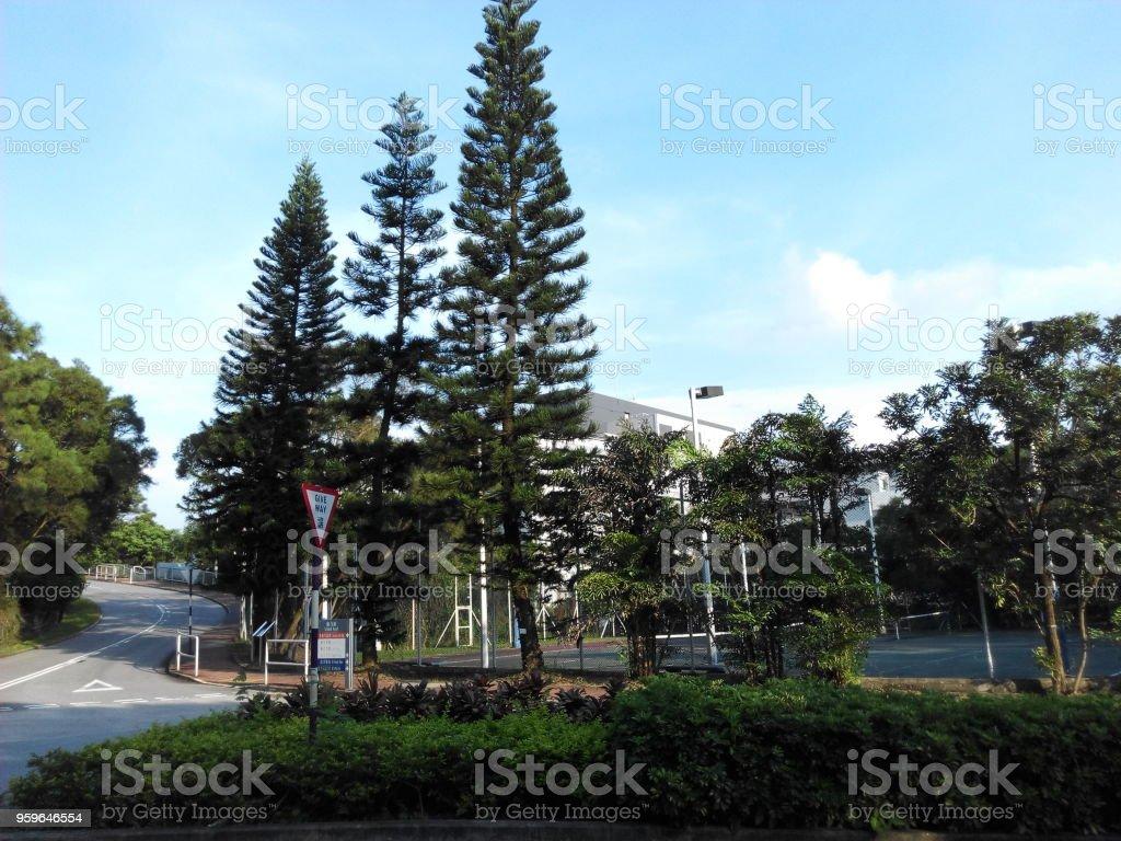 Árboles dependen de otras - patrón interesante - Foto de stock de Aire libre libre de derechos