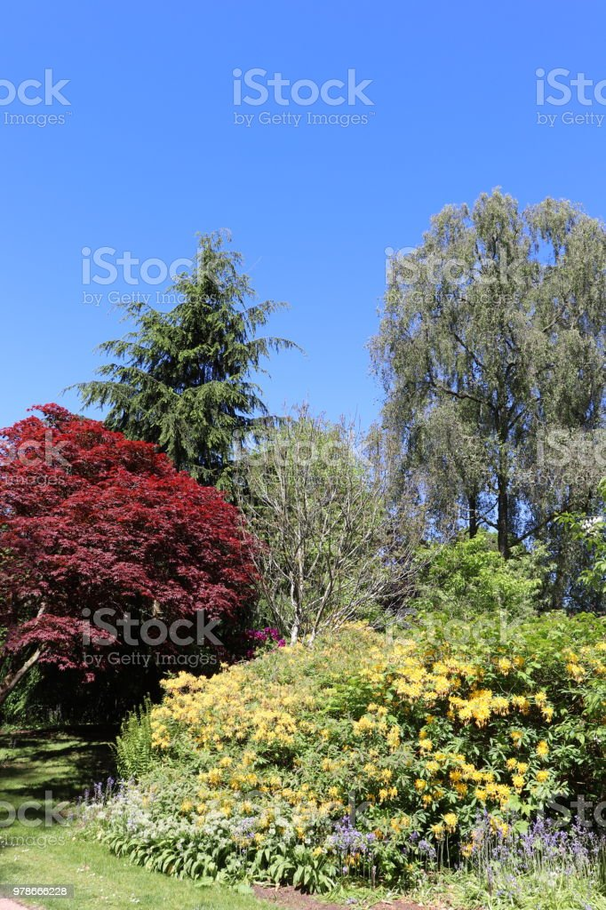 Trees Shrubs And Plants In Woods In Spring Stock Photo Download