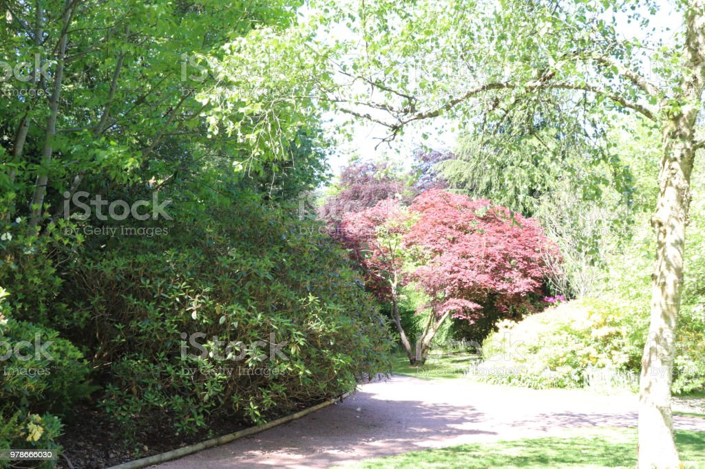 Trees Shrubs And Plants In Woods In Spring With Rhododendron Stock