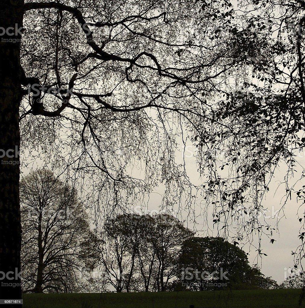 trees silhouette royalty-free stock photo