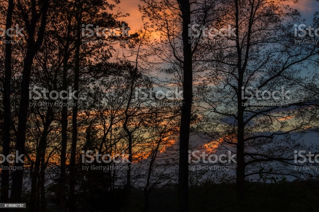 Trees Silhouetted stock photo