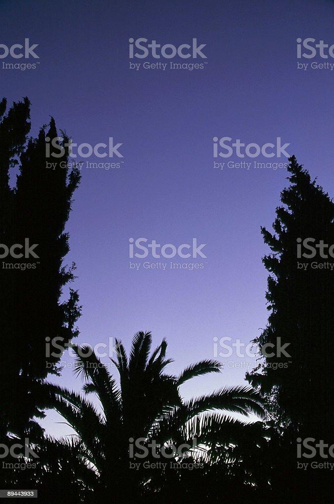 Arbres Silhouettes et Crépuscule bleu ciel photo libre de droits