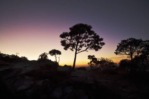 Silhuetas das árvores no alvorecer em Brasil - foto de acervo