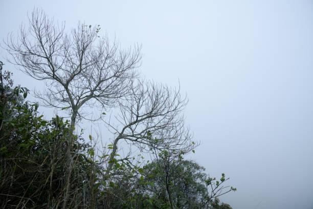 Silhuetas das árvores no céu enevoado em Brasil - foto de acervo