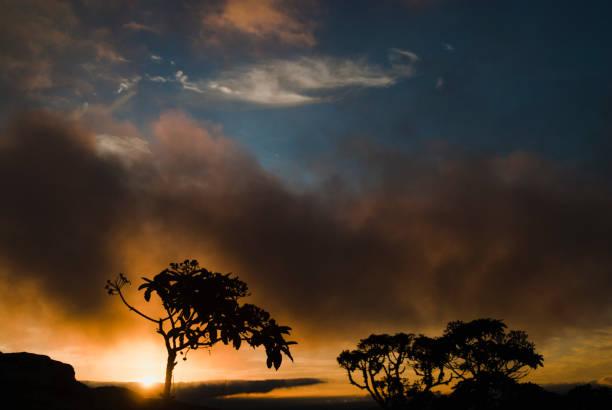 Silhuetas de árvores, ao nascer do sol no Brasil - foto de acervo