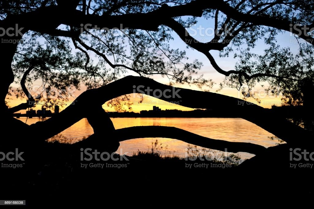 Trees Silhouetting Charles stock photo