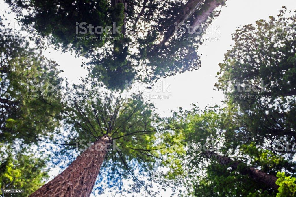 Tree's splash! - Royalty-free Beauty Stock Photo