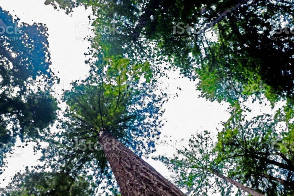 Trädets splash! - Royaltyfri Design Bildbanksbilder
