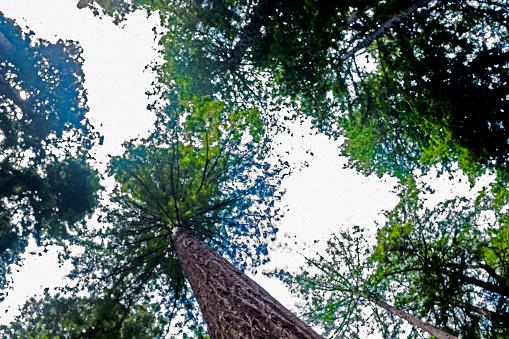 Trädets Splash-foton och fler bilder på Design