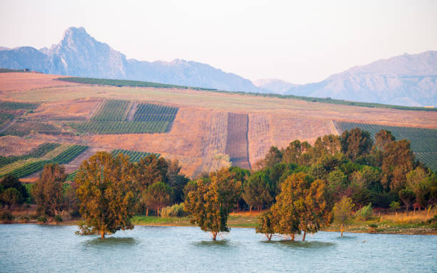 Trees standing in water - Sicily stock photo