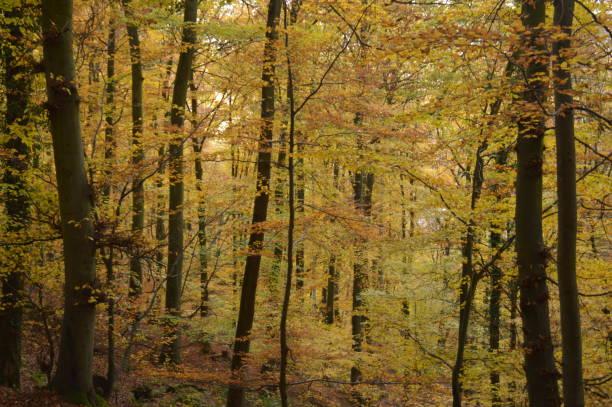 träden börjar ändra färger som hösten approches - bernkastel kues höst bildbanksfoton och bilder