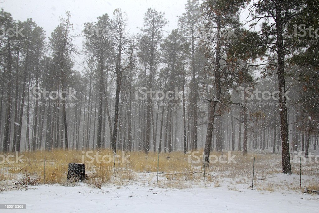 Trees surviving in nature royalty-free stock photo