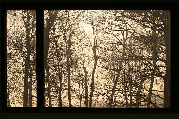 Trees through the window stock photo