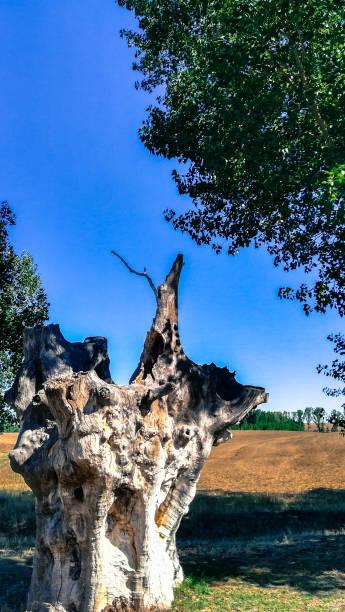 Arboles, tronco, paisaje rural. - foto de stock