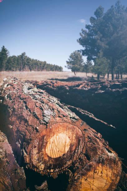 arboles, tronco, paisaje rural. - monse del campo fotografías e imágenes de stock