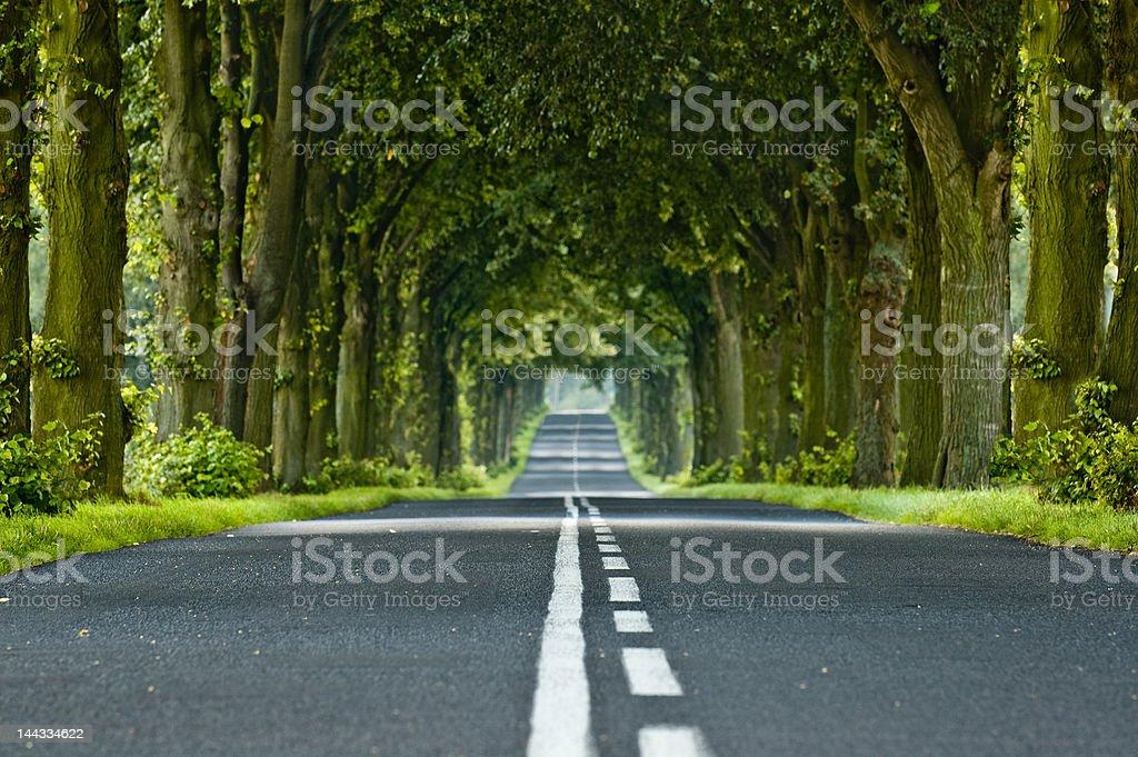 Tree's tunnel stock photo