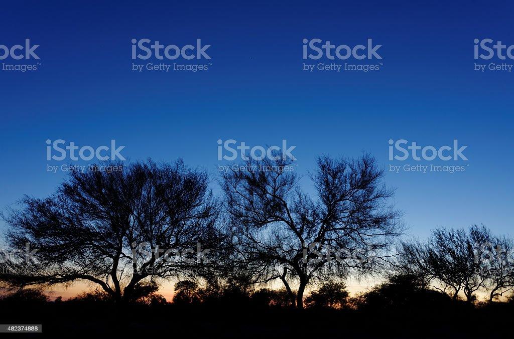 Trees twilight silhouette stock photo