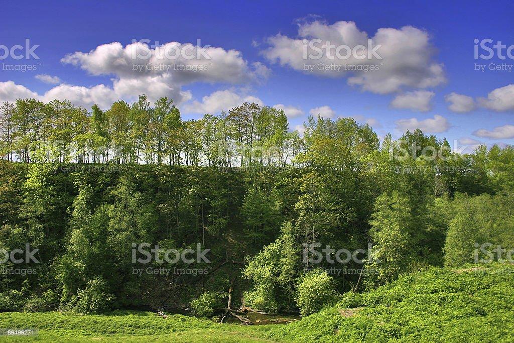Alberi sotto le nuvole foto stock royalty-free