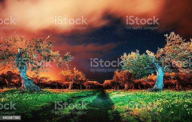 Photo of Trees under the stars