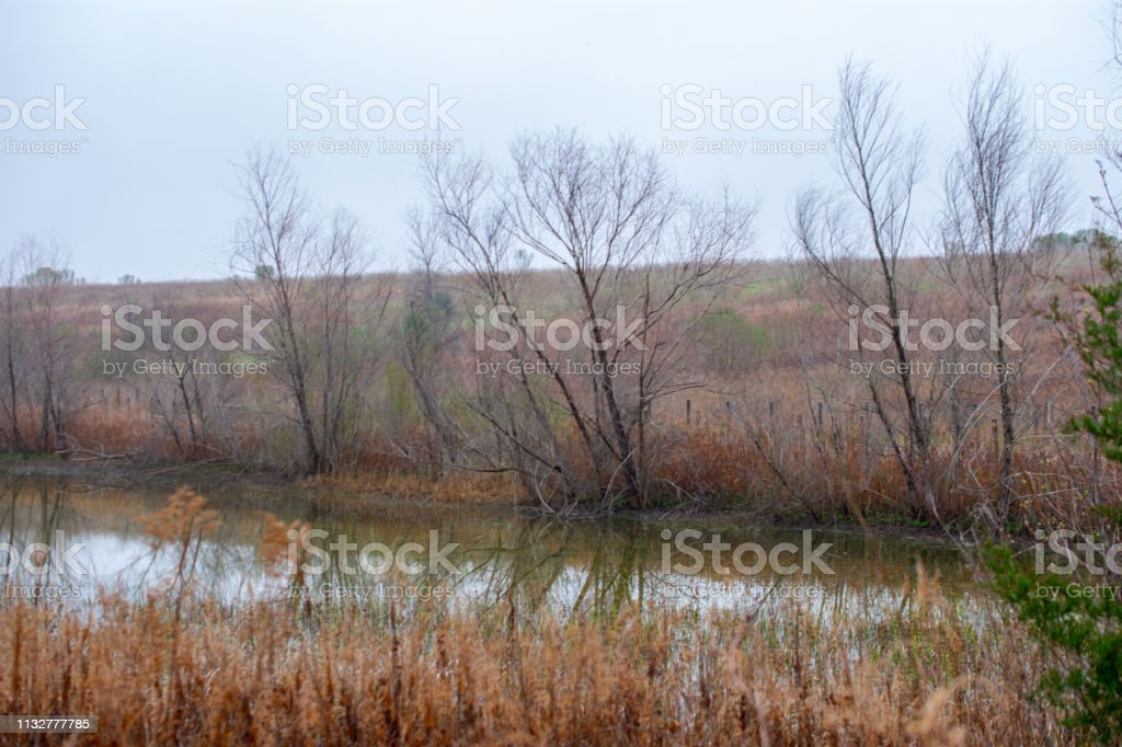 trees, water and grasses landscape Texas stock photo