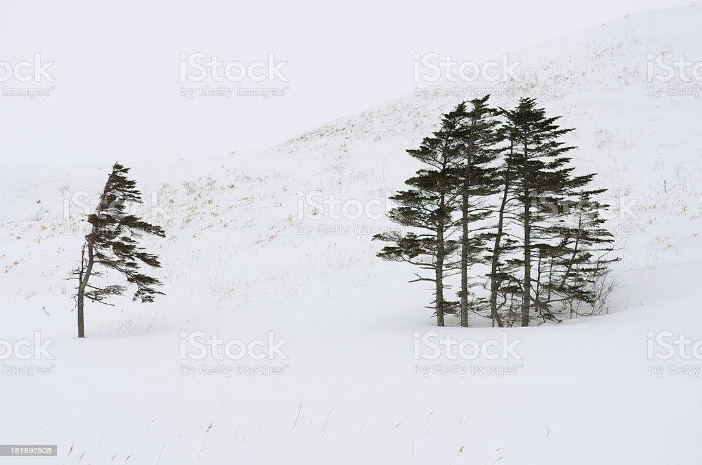 Trees winter royalty-free stock photo