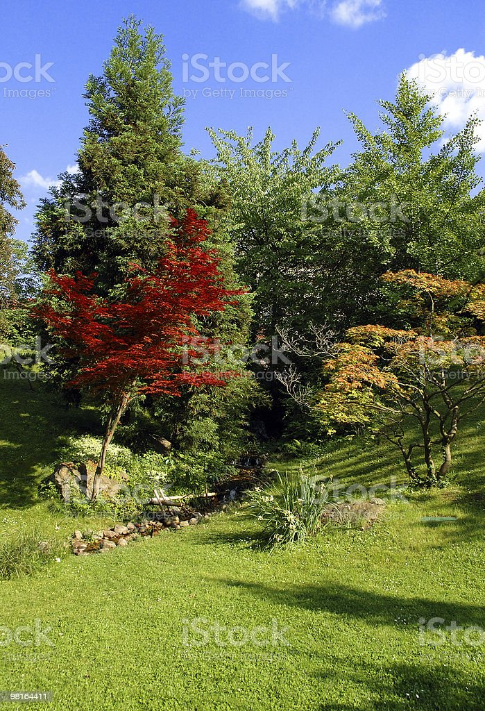 RGY trees with a little stream royalty-free stock photo