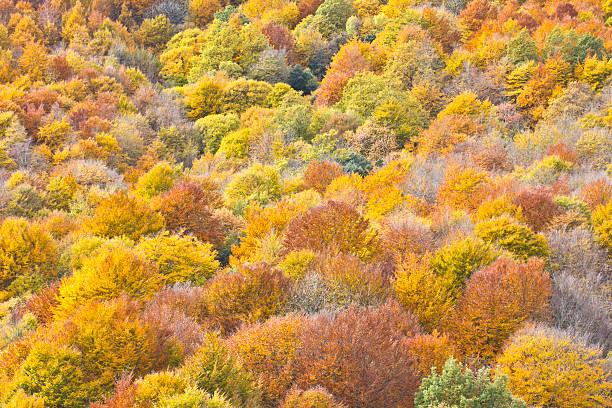 Palmeras con colores en otoño - foto de stock