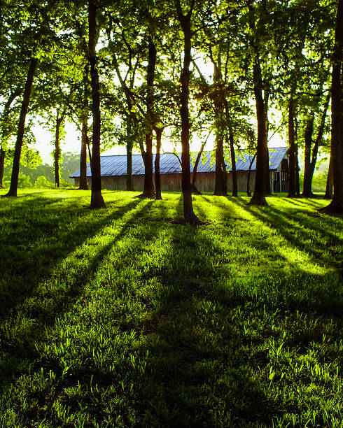 Trees with barn in background stock photo