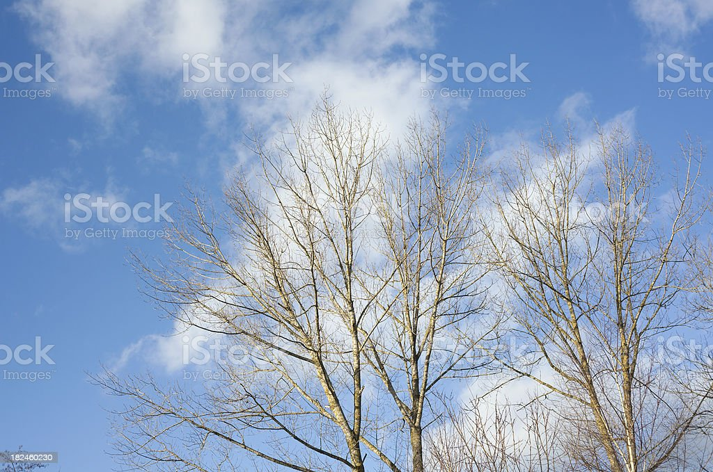 trees with cloudy sky royalty-free stock photo