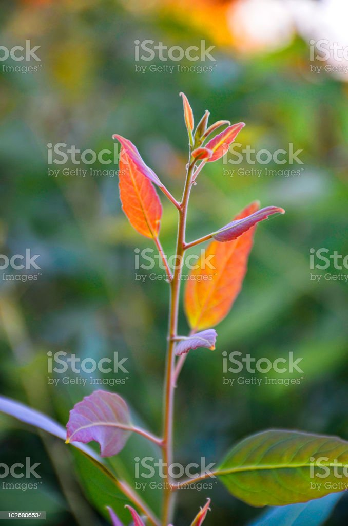 Trees with different leaves colors stock photo