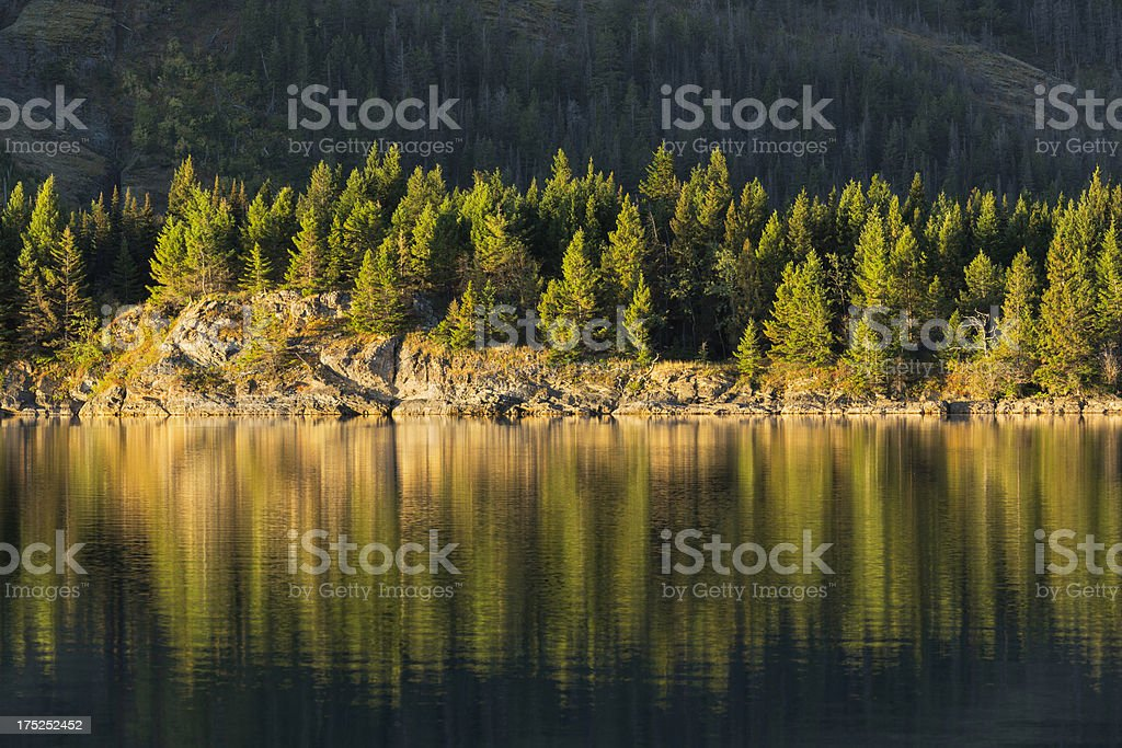 Trees with Golden Light royalty-free stock photo