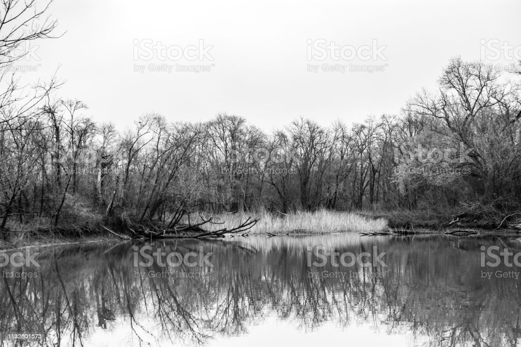 trees with lake and reflection monochrome stock photo