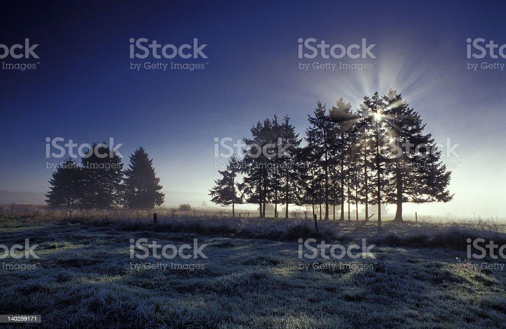 Bäume mit Sonne – Foto