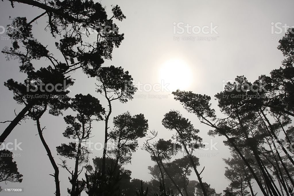Trees with the Sun Blotted out by Morning Fog royalty-free stock photo
