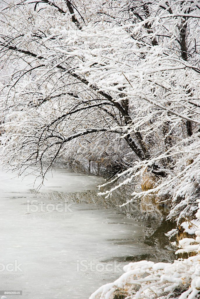 Trees with Wet Snow on Branches over Frozen Pond royalty-free stock photo
