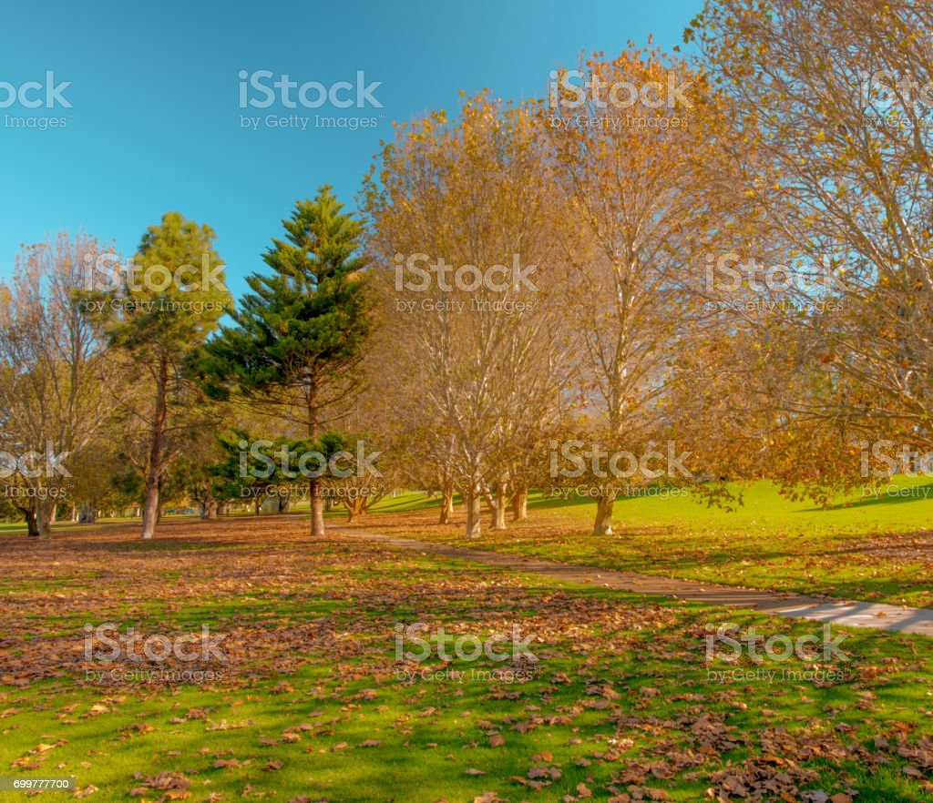 trees without leaves in park stock photo