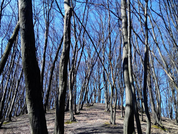 Trees without leaves – Foto