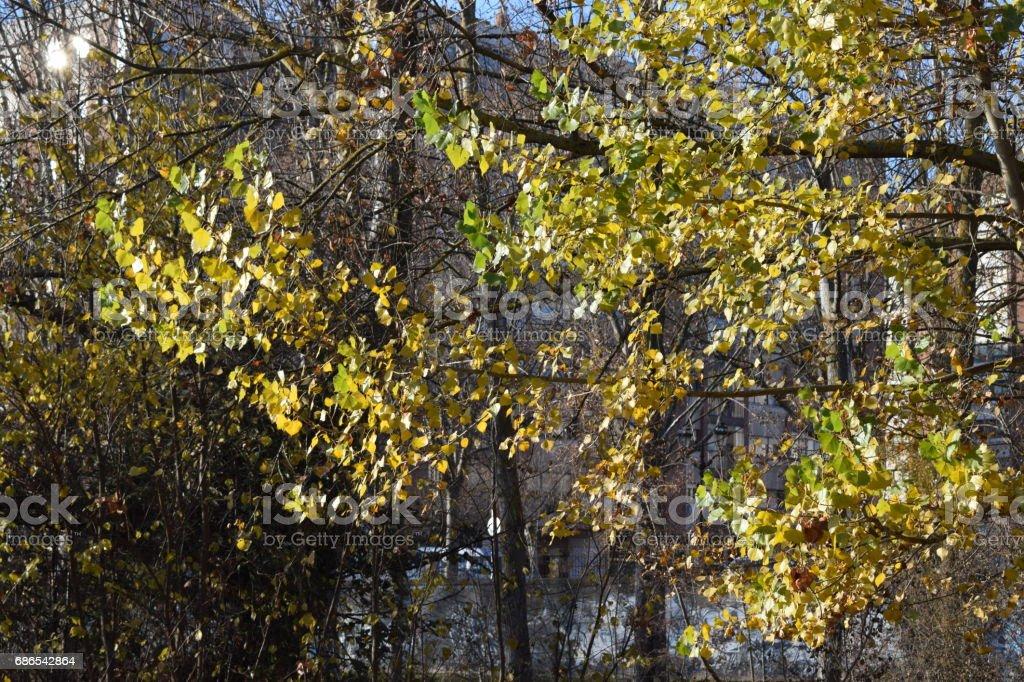 Bomen zonder bladeren. royalty free stockfoto