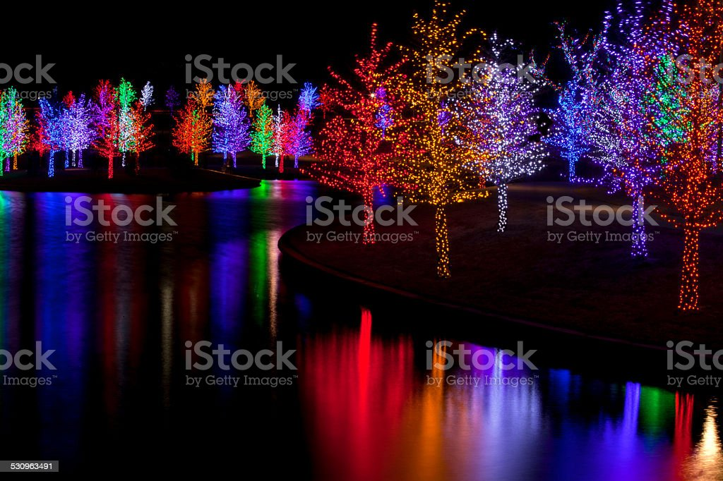 Trees wrapped in LED lights for Christmas stock photo