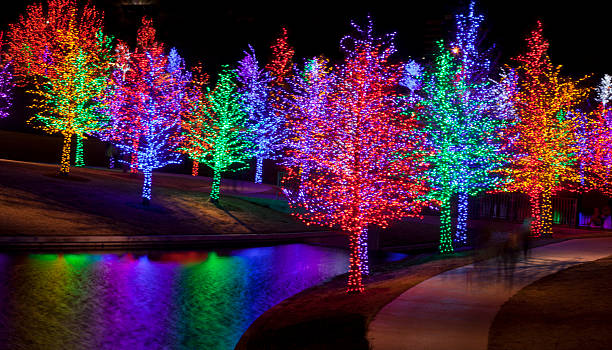 Trees wrapped in LED lights for Christmas