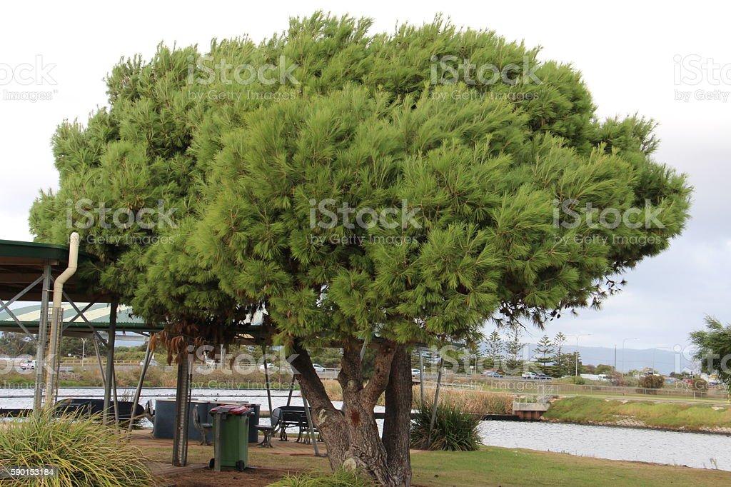 Tree@skatepark stock photo