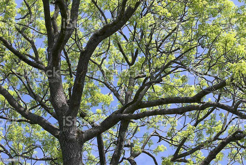Treetop Against Blue Sky royalty-free stock photo