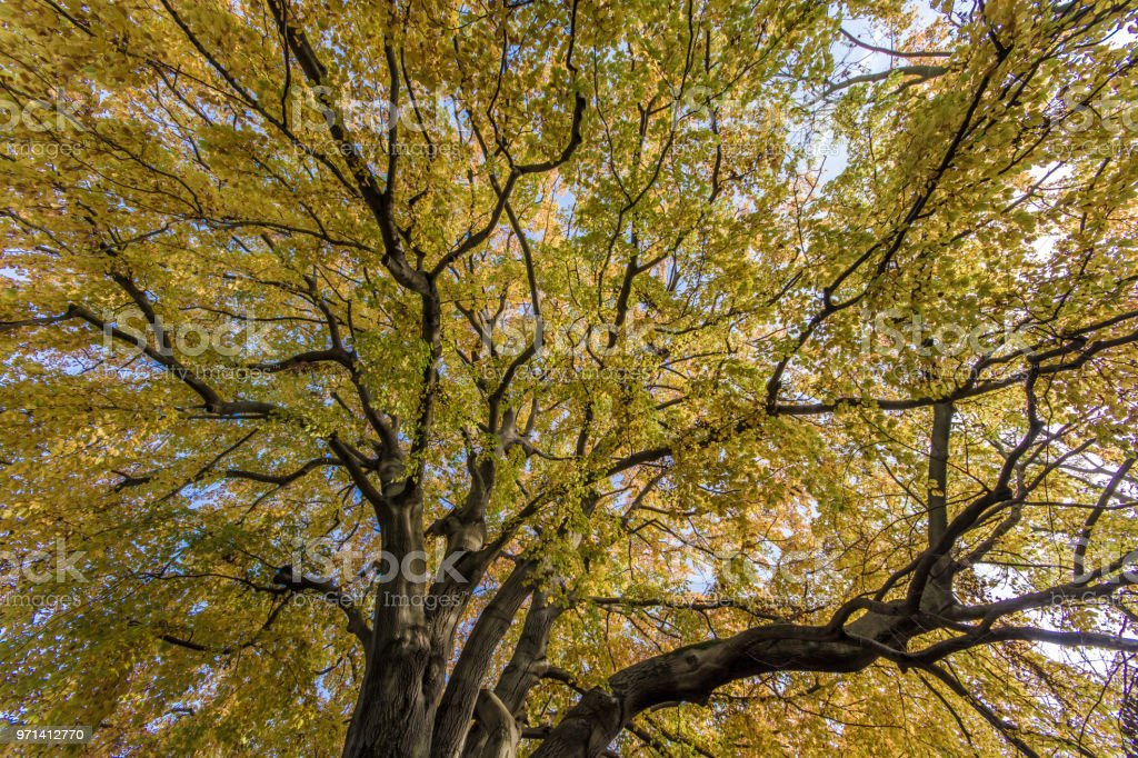 Treetop autumn colored in landscape format stock photo