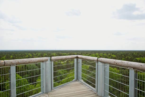 Treetop canopy walkway panoramic view stock photo