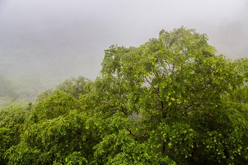 Treetop during Monsoon in Lonavala