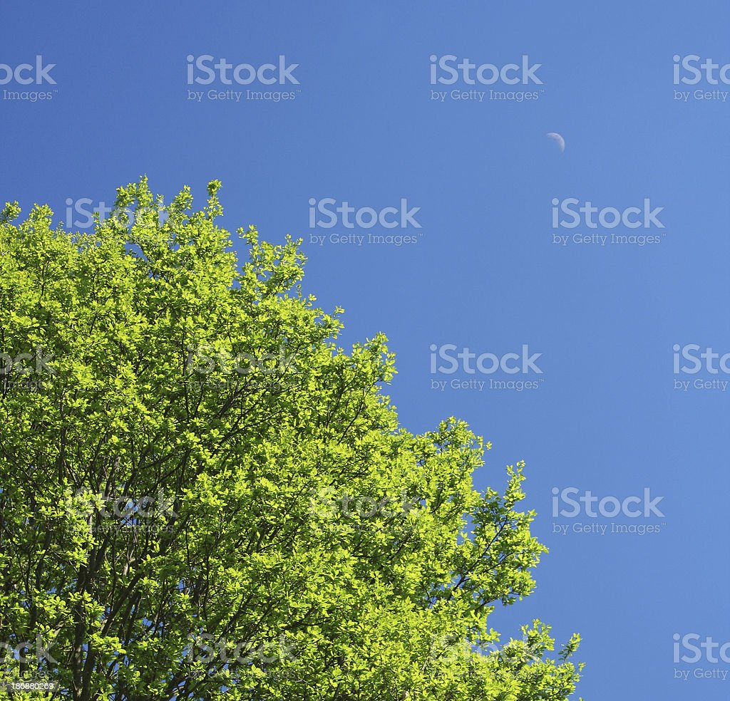 Treetop in the spring time royalty-free stock photo