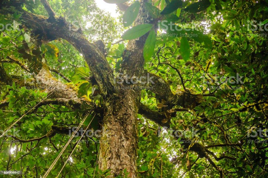 Copas de árvore de floresta tropical no Brasil - foto de acervo