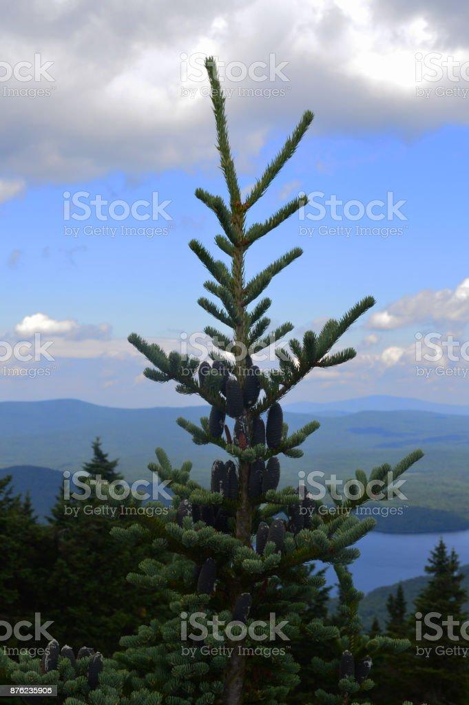 Treetop overlooking mountain lake stock photo