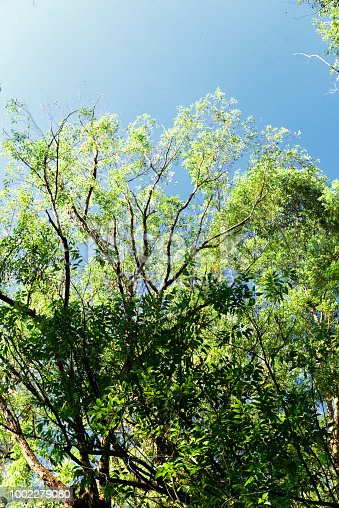 Treetop against a clean sky on a sunny day